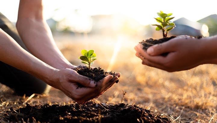 Bäume pflanzen fürs Klima ist ein everybody's darling