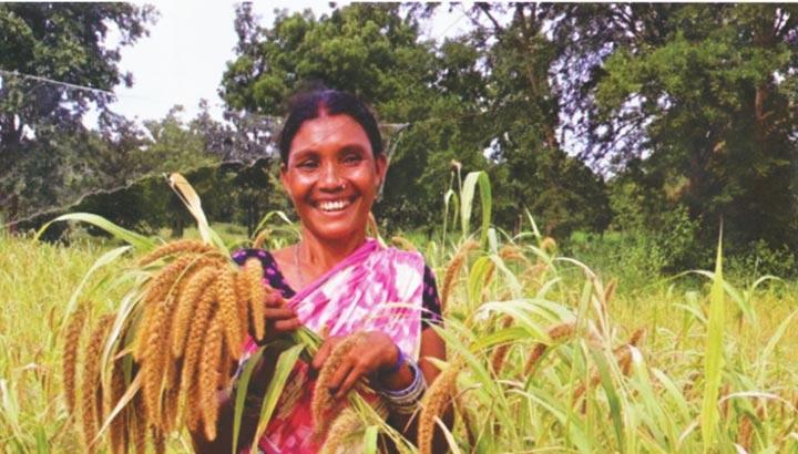 Hirseanbau im indischen Bundesstaat Odisha