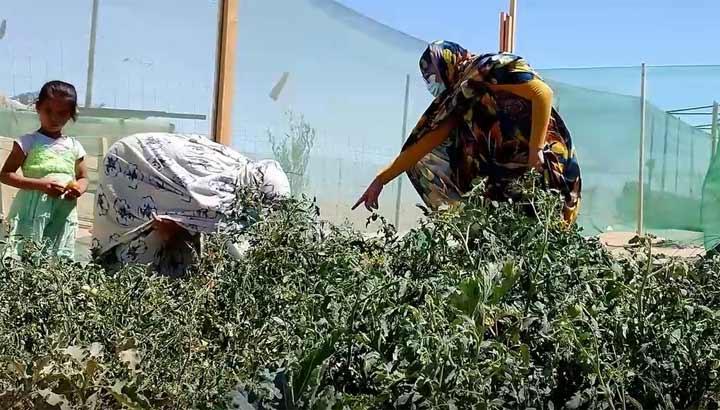 Westsahara: Frauen in einem Garten in den Flüchtlingslagern