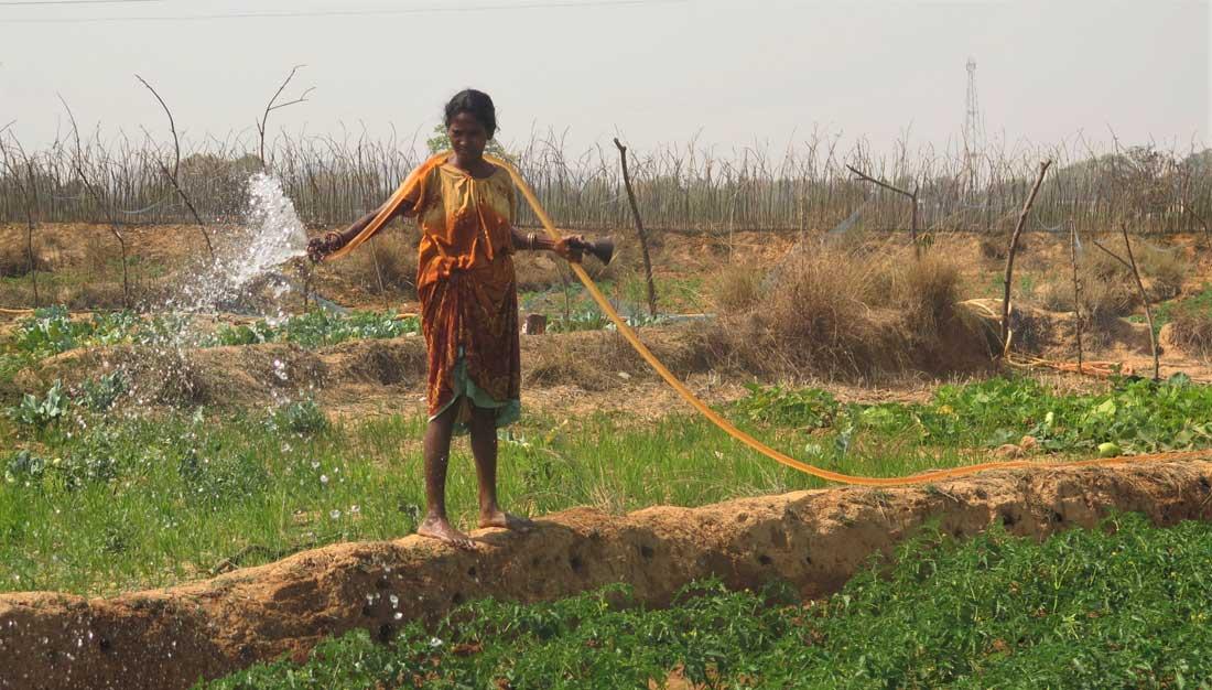 Bäuerin in Bihar bewässert Gemüsegarten