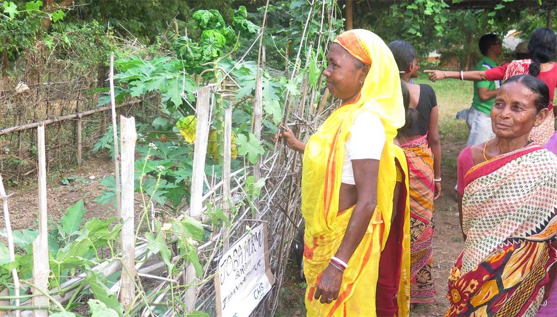 Frauen in Jharkhand vor ihrem Gemüsegarten